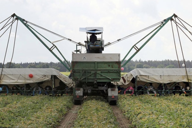 A Helping-robot-hand To Harvest Vegetables 2