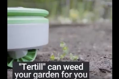 Video: Tertill - Weeding Robot For Home Gardens