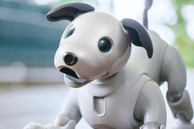 Video: Sony Revives A Robot Canine Companion