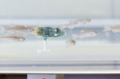 Video: Secret Agent Fish: A Robotic-spy Among The Fishes