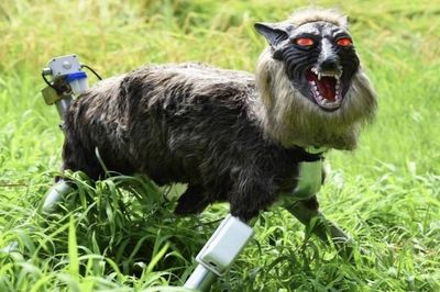 Video: Monster Wolf Robot In Field Test To Scare Invasive Wild Boars Away