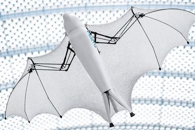 Have You Ever Seen A Realistic Flying Robotic Fox?
