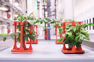 Scientists Grow Vegetables In Sunless Conditions