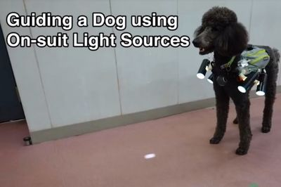Control A Dog By Using A Spot Light Source!