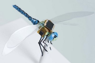 This Dragonfly Is A Remote Controlled Cyborg Drone