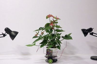 There Is A Hybrid Plant Robot That Can Move Towards Light