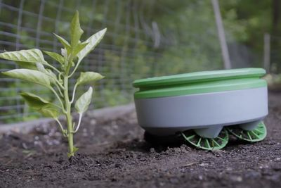This Tertill Robot Will Stop Weeds From Growing In Your Garden