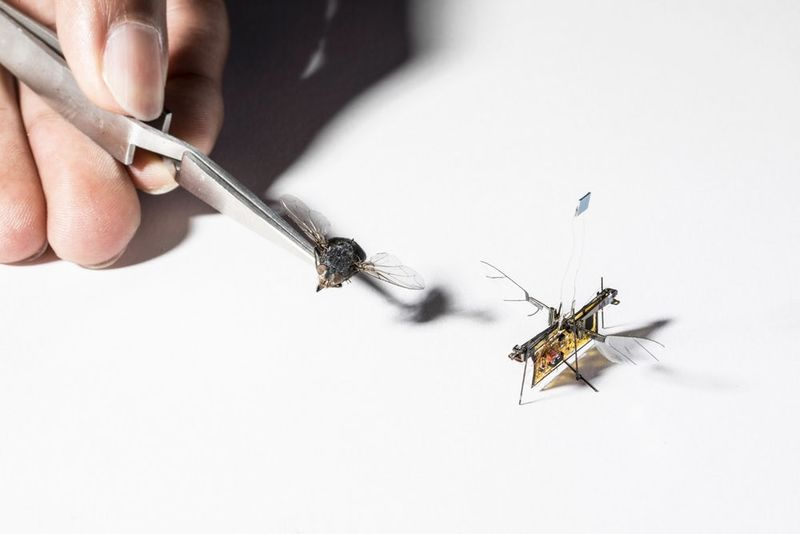 The First Micro-robot-flying-insect Is Here 1