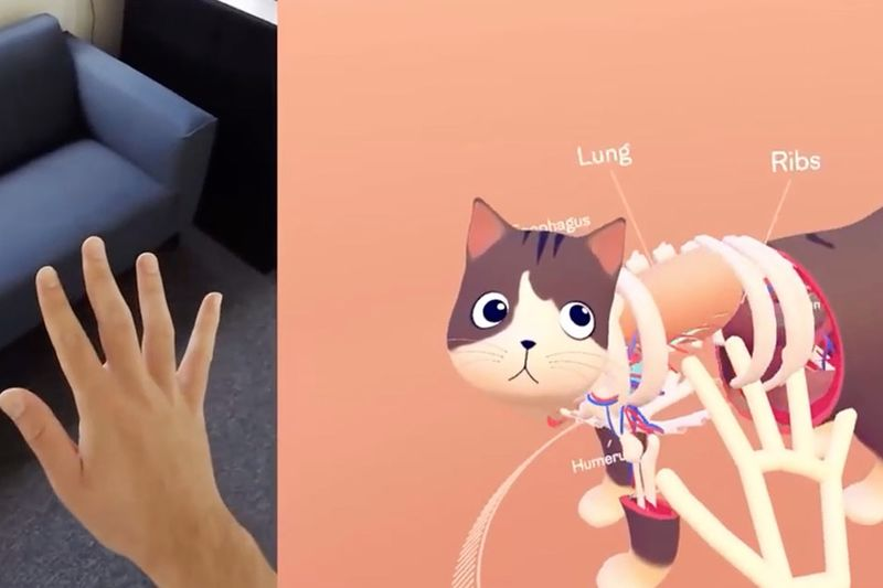 You Can Now Explore The Anatomy Of A Cat 1