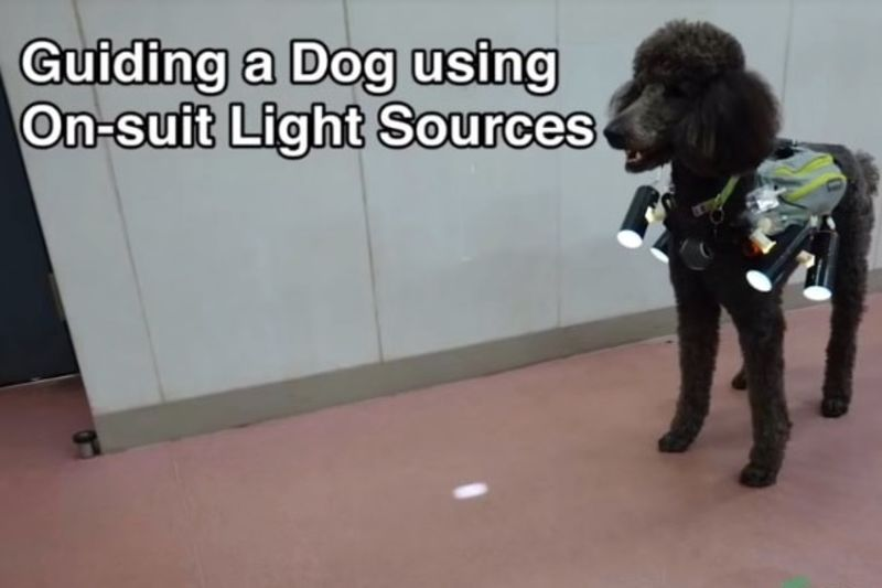 Control A Dog By Using A Spot Light Source! 1