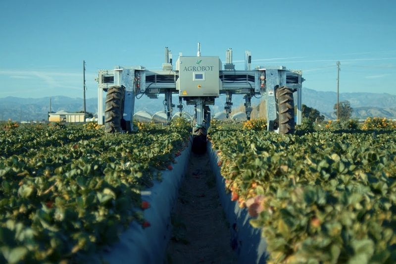 There Is A Strawberry Picking Robot, Cause Why Not? 1