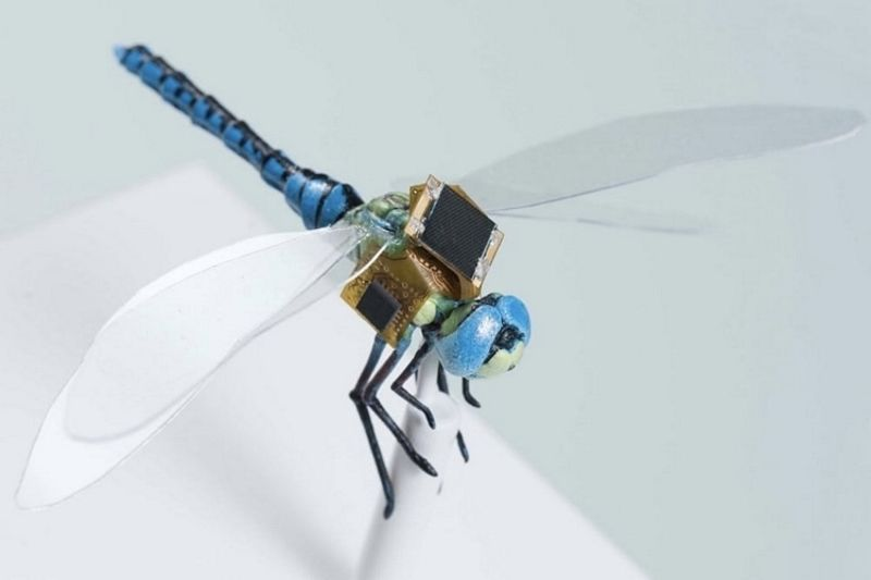 This Dragonfly Is A Remote Controlled Cyborg Drone 1