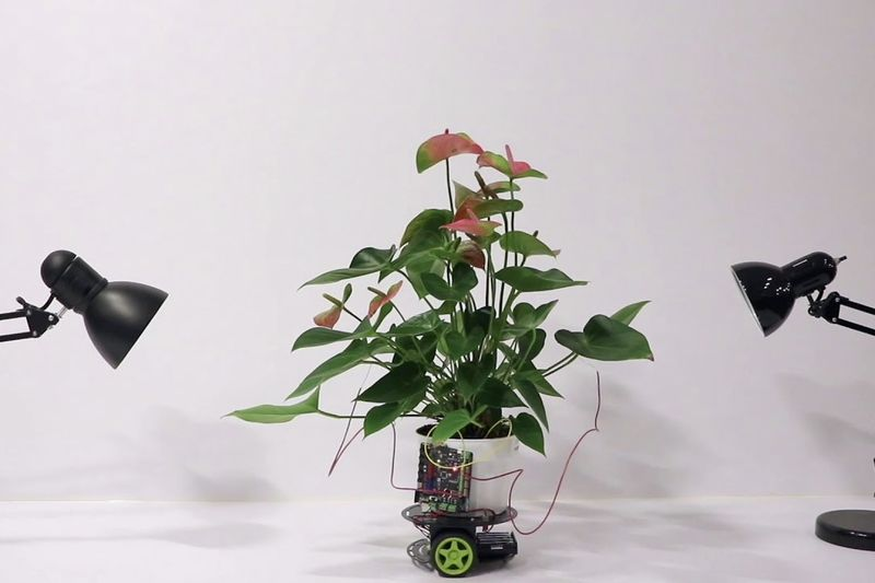 There Is A Hybrid Plant Robot That Can Move Towards Light 1