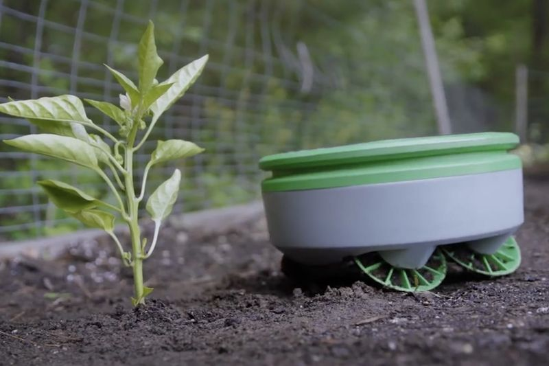 This Tertill Robot Will Stop Weeds From Growing In Your Garden 1