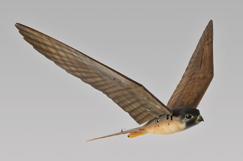 There Is A Robotic Falcon Bird That Can Scare Real Birds 1