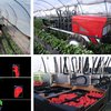 There Is A Strawberry Picking Robot, Cause Why Not? 2